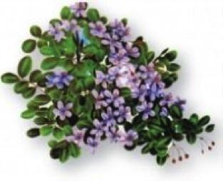 national-flower